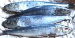 Tregida Sardines Pan Ready