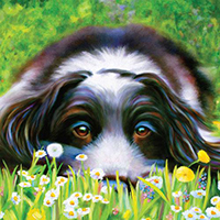 "Greetings Card ""Daisy Daisy"" by Denise Laurent"