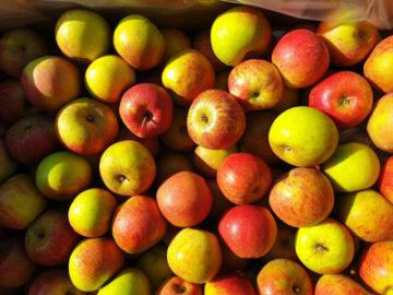 Apples Lord Lambourne ~ Organic ~ 500g
