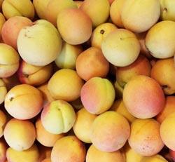 Apricots ~ Organic ~ 250g