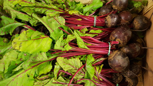 Beetroot Bunched ~ Organic