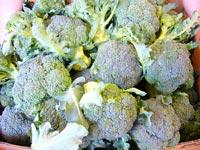 Broccoli ~ Organic ~ 500g