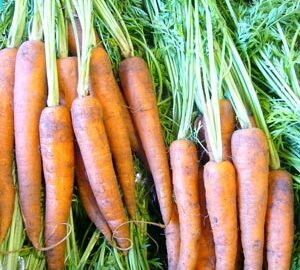 Carrots Bunched with Tops On ~ Organic