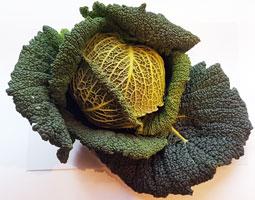 Cabbage Savoy ~ Organic