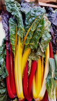 Chard Rainbow ~ Organic