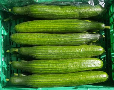 Cucumber ~ Organic