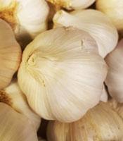 Garlic ~ Organic