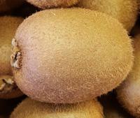 Kiwi ~ Organic