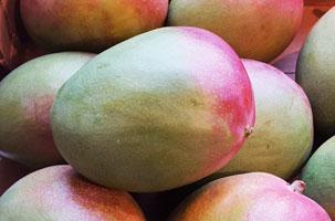 Mango ~ Organic