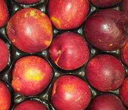 Nectarine ~ Organic
