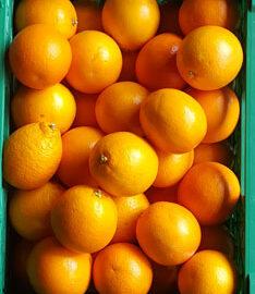 Oranges ~ Organic ~ 500g