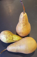 Pears ~ Conference ~ Organic ~ 500g