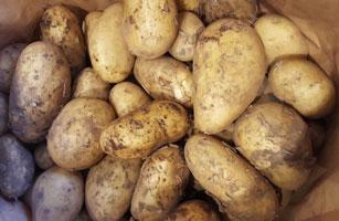 Potatoes New ~ Organic 500g