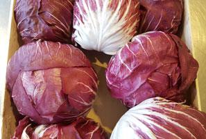 Raddichio Lettuce ~ Organic