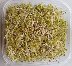 Sky Sprouts Organic Alfalfa Sprouts