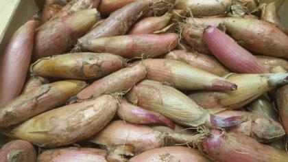 Shallots Banana ~ Organic ~ 250g