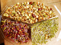 Sky Sprouts Trio of Organic Mixed Salad Sprouting Tray