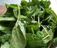 Spinach Babyleaf ~ Organic