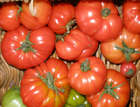 Tomatoes Cherry ~ Plum ~ in a Punnet ~ Organic ~ 250g
