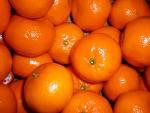 Mandarins ~ Organic ~ 500g