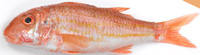 Tregida Red Mullet Pan Ready ~ 300g Approx