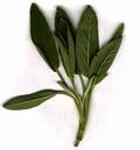 Sage ~ Organic