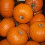 Pumpkin Organic ~ Medium ~ Local to us