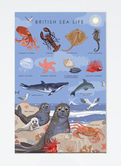 Greetings Card ~ British Sea Life by Angie Spurgeon