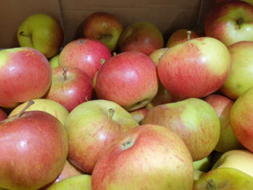 Apples Red Pippin ~ Organic ~ 500g