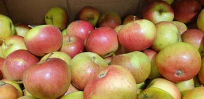Apples Spartan ~ Organic ~ 500g