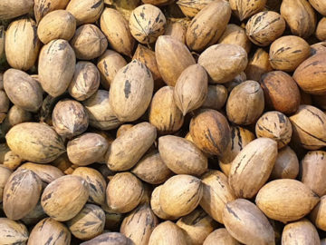 Pecans in the Shell ~ Organic ~250g